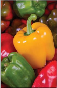 November's Harvest of the Month is Bell Peppers