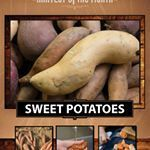 January 24th taste test -  Harvest of the Month - Sweet Potato