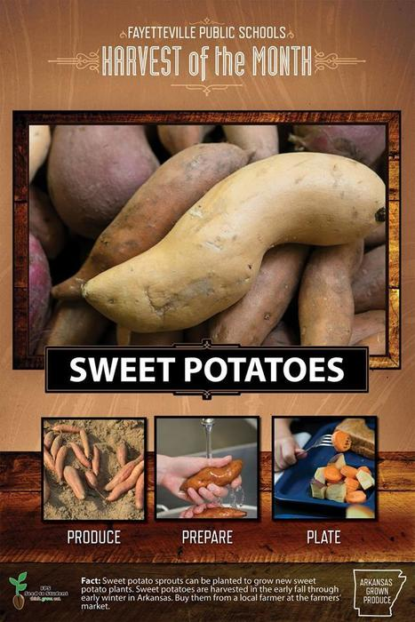January's Harvest of the Month is the stupendous SWEET POTATO!  This month students and staff will sample Ranchero Roasted Sweet Potatoes seasoned with Tex Mex-style spices. Sweet potatoes for the taste tests and winter menus were grown at Dickey Farms in Tontitown, Arkansas. Did you know, because of their sweet flavor and creamy texture, mashed sweet potatoes can be used instead of fat and sugar in many desserts (i.e. sweet potato brownies)? #harvestofthemonth #F2S #arkansasgrown