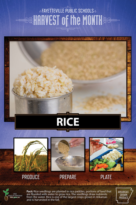 Flyer of Rice as harvest of the month